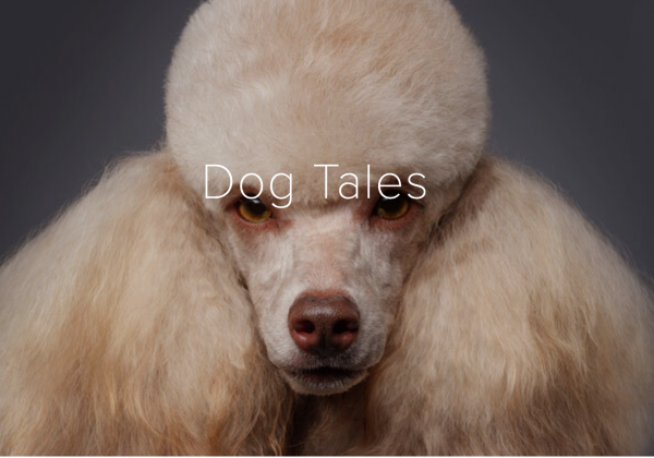 Dog Tales Podcast